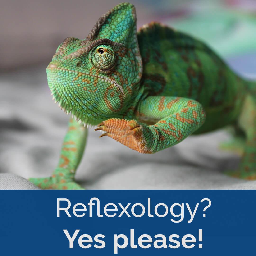 lizard yes please